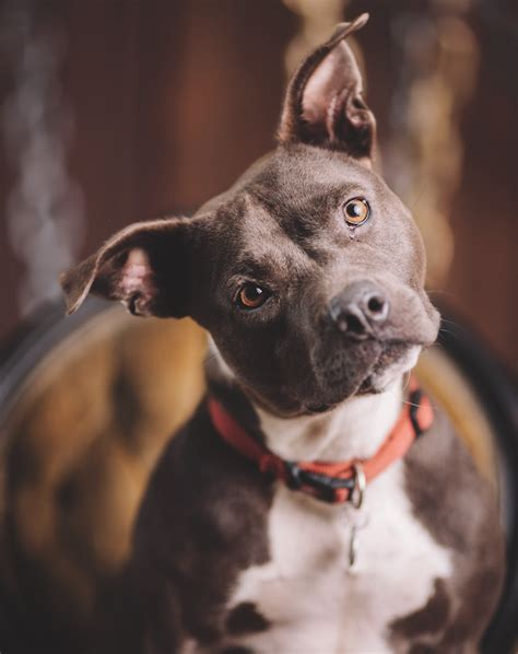 family dogs new family dogs new shelter gives quot unadoptable quot dogs time to find their forever home