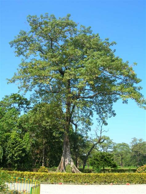 the about trees official state trees of india that you should
