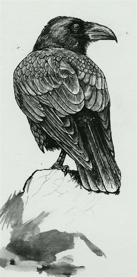 tattoos of crows there is such much detail and tone in this charcoal or