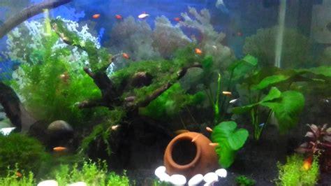 aquascape kecil aquascape ikan kecil ukuran aquarium 80x50x50 youtube