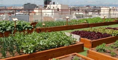 que plantar en casa qu 233 plantar en el huerto de casa en oto 241 o y primavera
