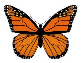 how to draw monarch butterfly