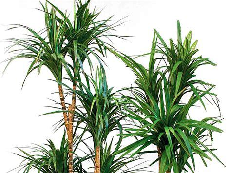 pianta appartamento piante da appartamento piante e arbusti