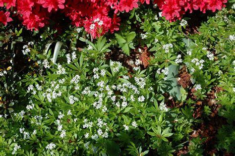 ste con fiori giardini