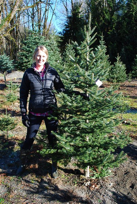 mountain creek christmas tree farm in snoqualmie seattle