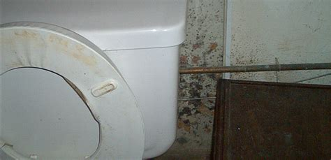 how to treat mold in bathroom how to treat mold in bathroom 28 images how to remove