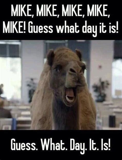 Hump Day Meme Funny - mike hump day meme www pixshark com images galleries