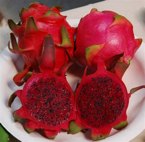 Hysteria Dragonberry Gum fruit seeds hylocereus undatus free bonus 6 variety seed pack a 30 value
