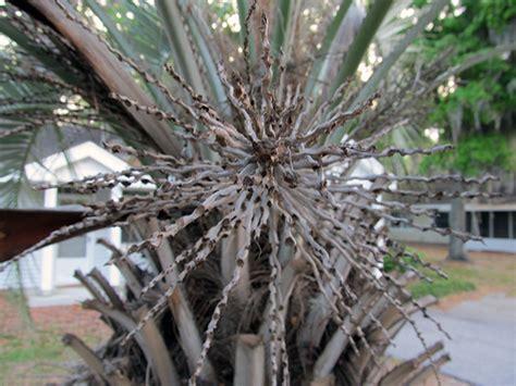 phd advisor tree exploding tree bark by skpandavp on deviantart