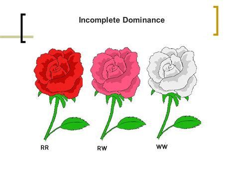 incomplete dominance codominance ppt video online download