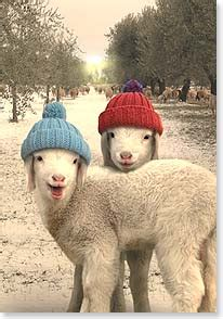 sheep christmas cards holiday cards featuring sheep