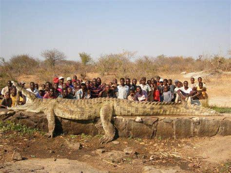 similar image search for post 22 ft 2 500lb crocodile