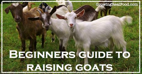 raising dairy goats a beginners starters guide to raising dairy goats books raising goats the beginners guide to raising goats how to