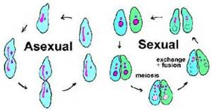 biologyplants asexual reproduction in plants dk