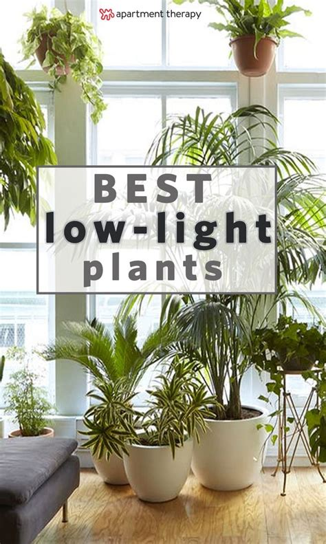 houseplants for low light conditions indoor plants care a collection of ideas to try about