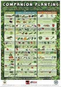 Planting Vegetable Garden Layout Savvy Housekeeping 187 Companion Planting