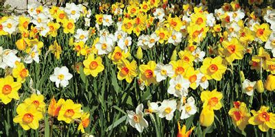 garden resources and trends fall blooming perennials how to tips