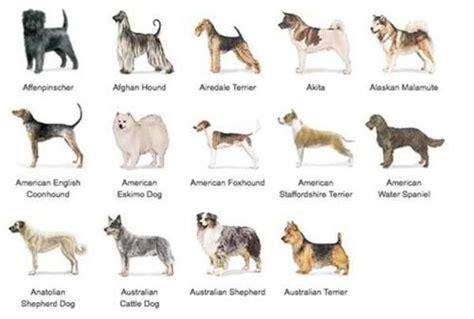 hunting dogs breeds list dog breed list pinterest