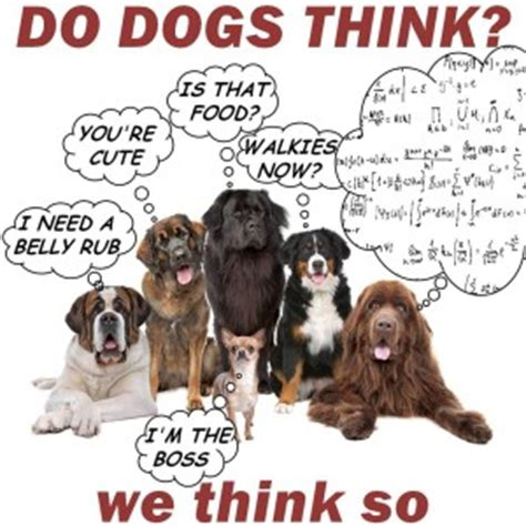 how do dogs think can dogs think positively woof