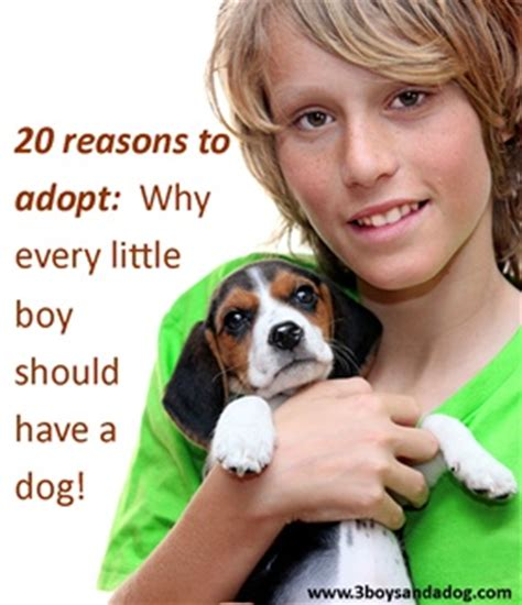 8 Reasons To Adopt A Pet Rather Than Buy by 17 Best Images About Adopt A Pet Today On