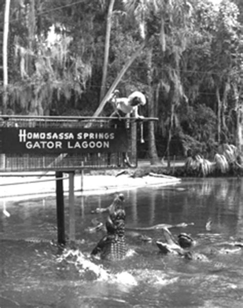 glass bottom boats jacksonville fl florida memory alligators in the backyard tourism