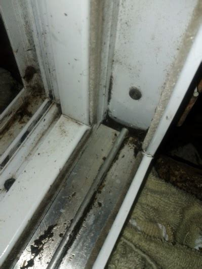 why is my sliding glass door frame water leaking through door frame frame design reviews