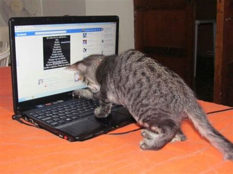 pet technology cat my pet technology animals and gadgets pinterest