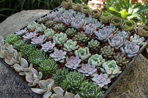 succulent planters for sale 25 best ideas about wedding succulent plants on pinterest wedding favour plants succulent