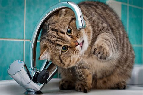 Cat Puts Faucet by 47 Home Repair Skills You Need To Survive Homeownership
