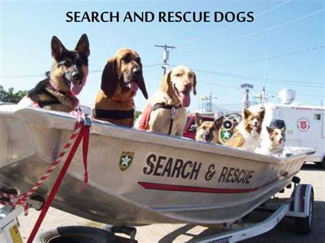 boat names with dog search and rescue dogs