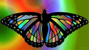 colorful butterfly colorful butterfly barbaras hd wallpapers