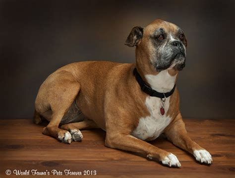 dogs dogs world fauna pets forever gallery of pet preservations