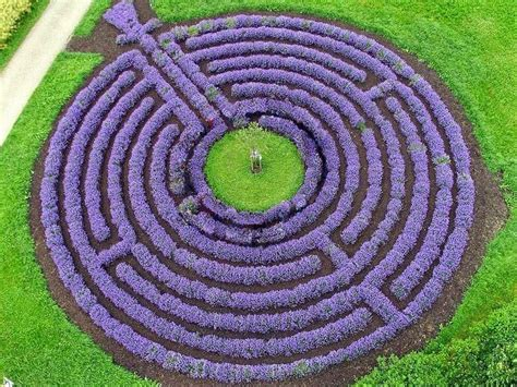 Lavender Maze | lavender as hedging plants the garden of eaden