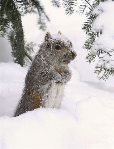 groundhog day events 276 best images about groundhog day on
