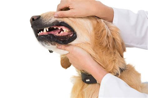 stomach problems in dogs eye ulcer surgery cost uk hairsstyles co