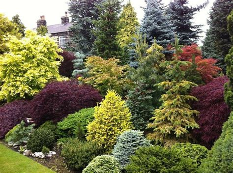 small trees and shrubs for landscaping in front yard hot landscaping beautiful combo of colors and textures gardens by design