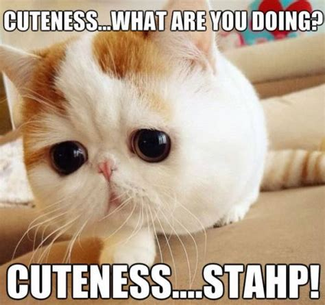 Too Cute Meme Face - too cute meme slapcaption com just too cute pinterest