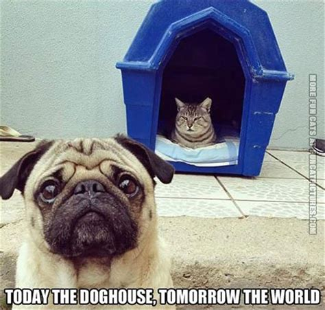 cat dog house the dog house is just the start fun cat pictures
