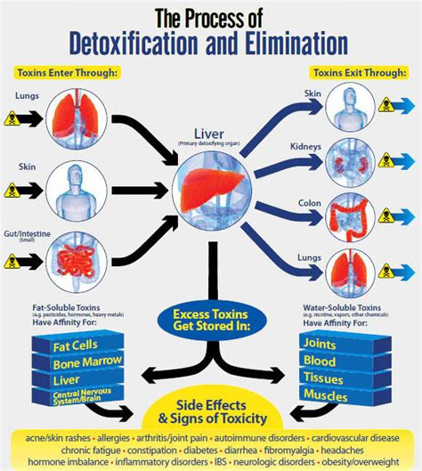 How To Detox If I Cannot Go On Medication by Toxin Elimination Toxic And What You Can Do