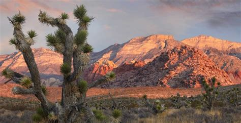 natural attractions  las vegas red rock canyon