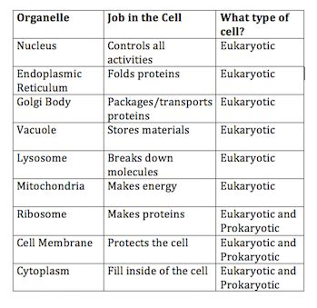 cell diagrams and organelle chart answers do eukaryotic cells a nucleus lesson