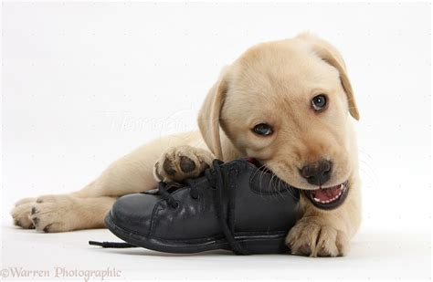 how to keep puppies from chewing chewing 3 ways to solve this problem
