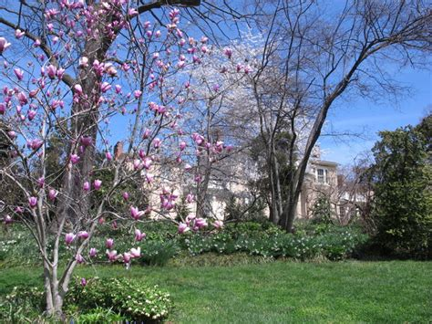 tudor place dc gardens tudor place in april dc gardens