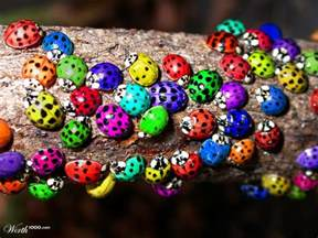 what color are ladybugs bugs worth1000 contests