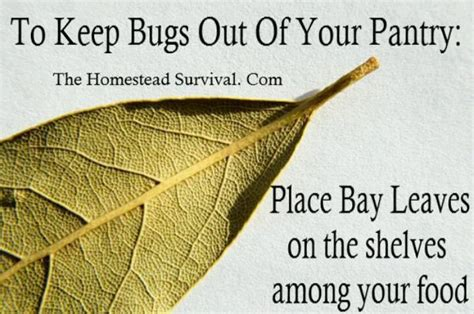 how to keep stink bugs out of your house keep bugs out of your pantry home cleaning and organizing tips pi