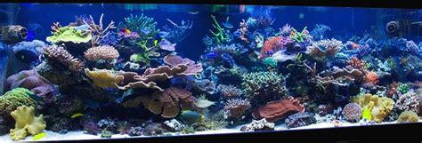Marine Aquarium Aquascaping by Best 25 Reef Aquascaping Ideas On Nano Reef