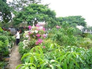 penjual tanaman hias  cirebon info tanaman lengkap