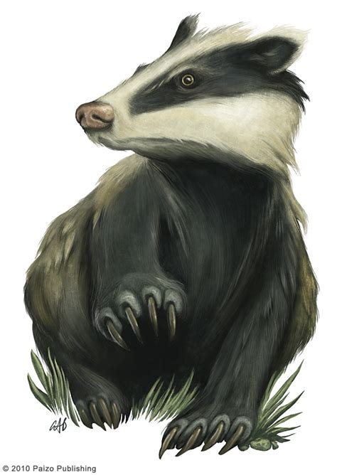 badger badger illustration honey badger badger