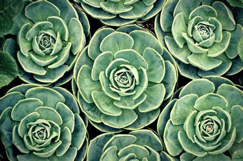 pattern from nature pattern from nature photograph by bbq