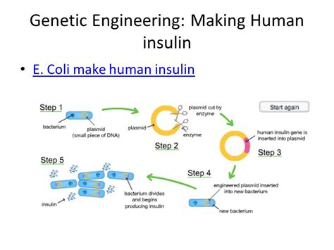 Genetic Engineering 10th grade genetic engineering ppt